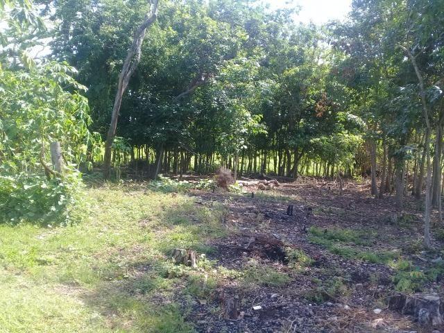 Fazenda top toda formada de 240 hectares a 100km de Várzea Grande - Foto 13