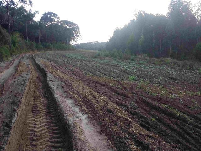 REF. 2162 Fazenda 30 alqs Reflorestamento, 40 alqs Plantio, 30 Alqs pasto, 20 Alqs APP - Foto 2