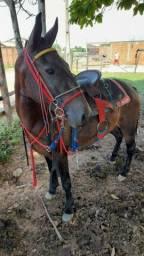 Cavalo e arreio completo