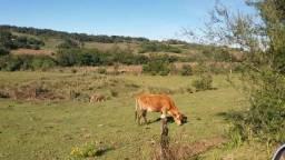 Vendo Vaca Jercey