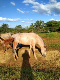 Cavalos*