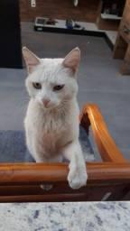 Doação gata branca