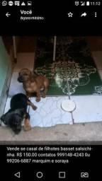 Filhotes de cachorros basset
