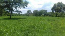 Fazenda em Paraíso, Tocantins, praticamente toda formada