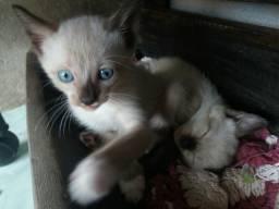 Gatinhos fofinhos doação