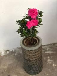 Título do anúncio: Plantas decorativas