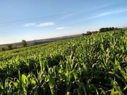 Oportunidade fazenda de 137 alqueires para lavoura,10 anos pra pagar