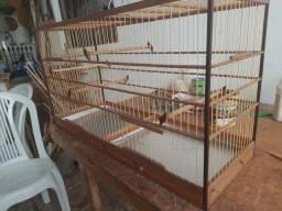 Gaiola para azulão e outros pássaros