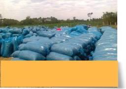 silagem de milho 20 toneladas preços a combinar sacas de 40 kl.