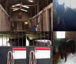 Hospedaria para Cavalos