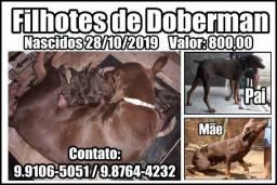 Dobermans