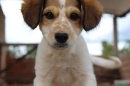 Cachorrinho doação