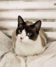 Gatinhos p/ adoção responsável - GVP (Gatinhos da Vila Prudente)