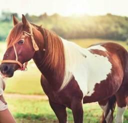 Vendo Paint Horse