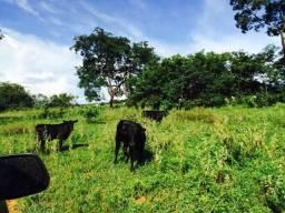 Fazenda em Rondonópolis a 16 km com 735 Hectares
