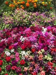 Caixa de flor - diversas (15 vasos)