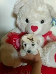 Poodle mini toyzinhos 974457467