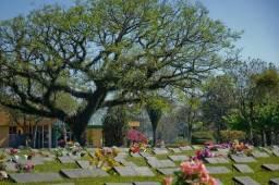Lote de cemitério jardim da saudade