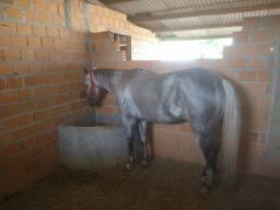 Cobertura de cavalo QM