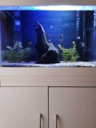 Título do anúncio: Aquario  completo para ir hoje!!