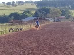 Egua de laço e campo