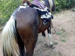 Vendo uma égua e um cavalo por 3,000.00R$