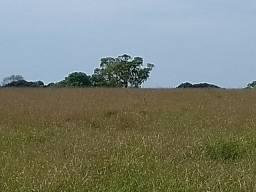 Chacara de 20 hectares