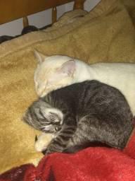Procura se gatos perdidos