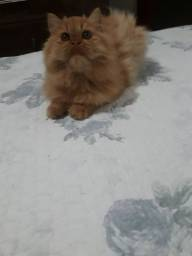 Roubo de gata