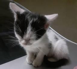 Doação de gatinha filhote