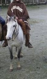 Vendo egua para laço