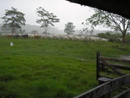 Fazenda em Boca do Acre