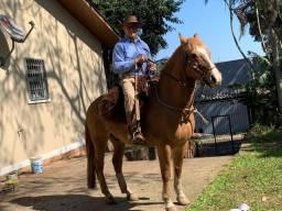 Cavalo Crioulo Gateado