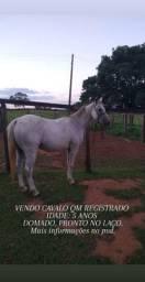 Vendo cavalo registrado
