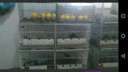 Gaioloes para aves em Maricá