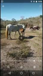 Vendo esa égua com a filha mais informações sobre chama no WhatsApp