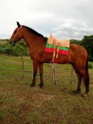 Cavalo recém amansado 4 anos