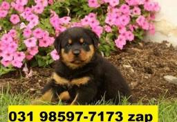 Canil Excelência Filhotes Cães BH Rottweiler Pastor Akita Boxer Labrador Dálmata