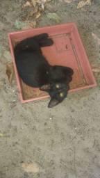Adoção de Gatos / Adote um Gatinho