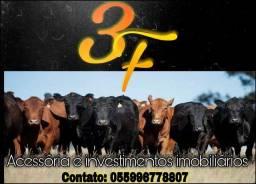 Fazenda com 242 hectares somente para pecuária .
