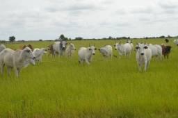 Fazenda em roraima 340 hectare
