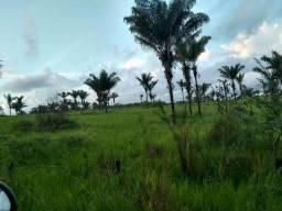 Vende se 130 hectares na VILA do Piquiá