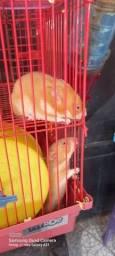 Título do anúncio: Vendo Hamster Sírio 20 reais a unidade