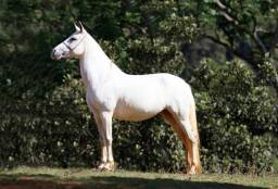 Égua manga larga registrada