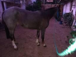 Vendo égua rusilha