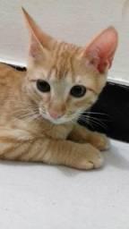Doação de gatinhos! Montes Claros