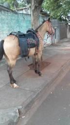 Egua porte medio