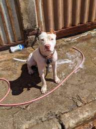 Pit Monsters com 7meses