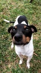 Cachorro amigo brincalhão