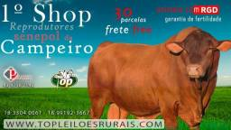 [MNM] Shopping Online Senepol Touros PO em 30 parcelas